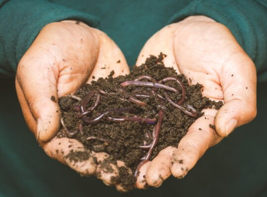 Worms Manifestation: Responding to symptoms of minor ailments